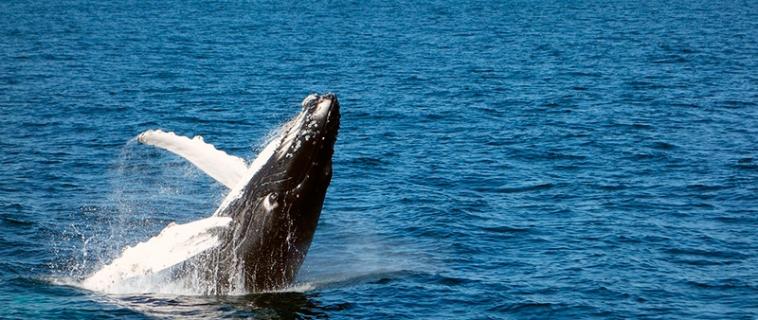 Paraíso de ballenas en Azores
