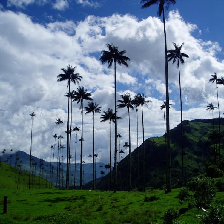 Colòmbia - Valle del Cocora