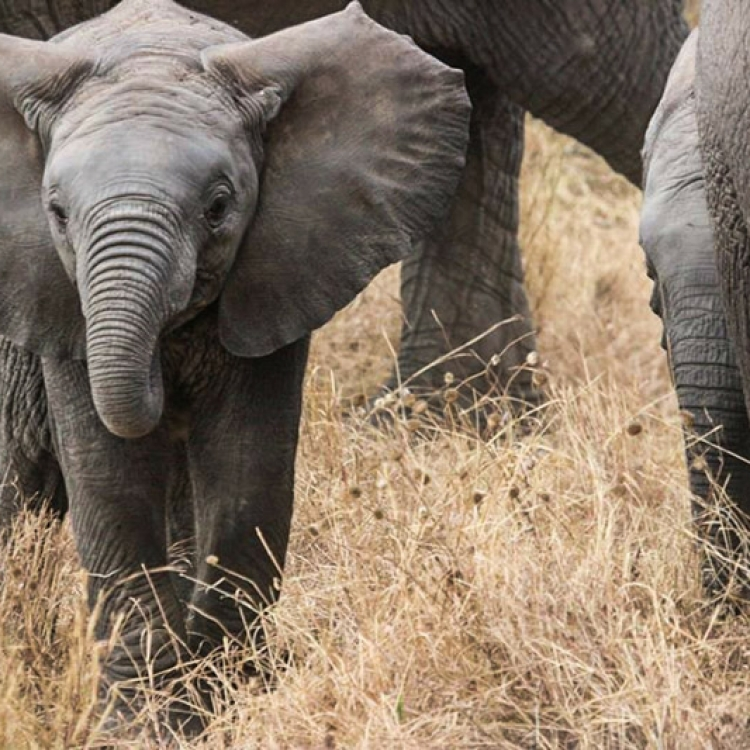 viatge tanzània nadiu viatges turisme responsable