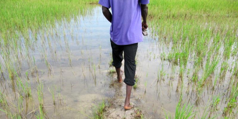 Gàmbia i Senegal - Nadiu Viatges