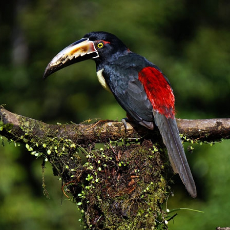 Costa Rica - Nadiu viatges
