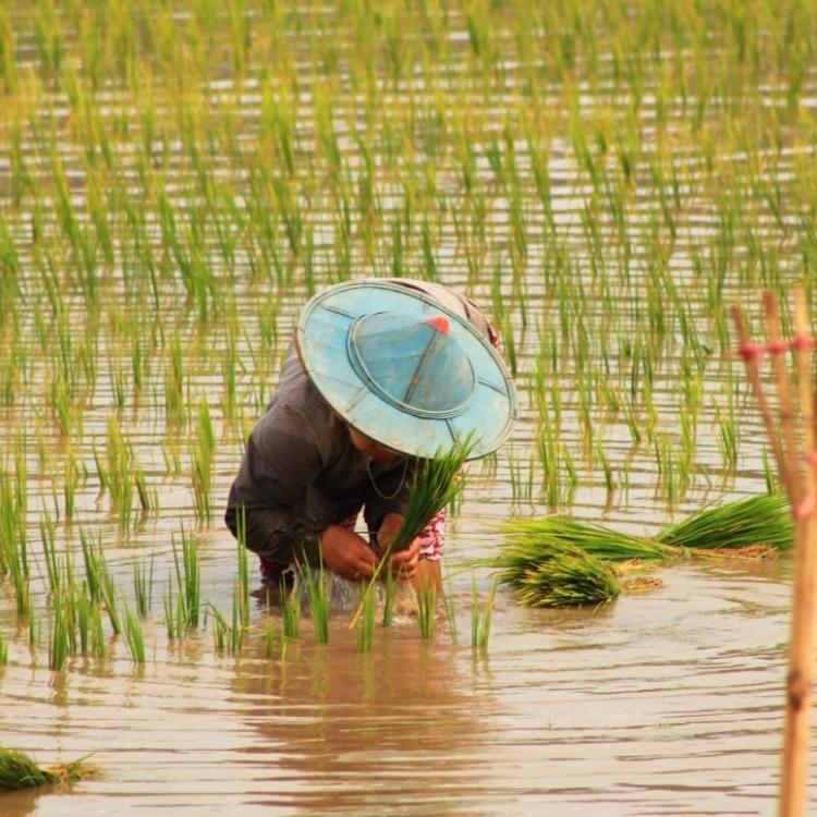 Viatge a Myanmar Nadiu Viatges Turismo Responsable