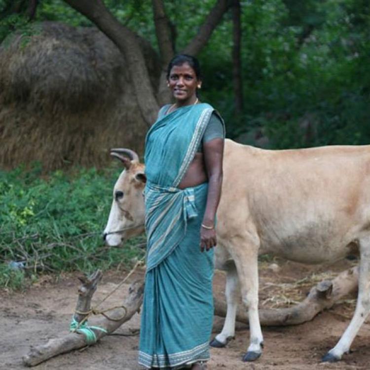 Índia - Laia Foundation