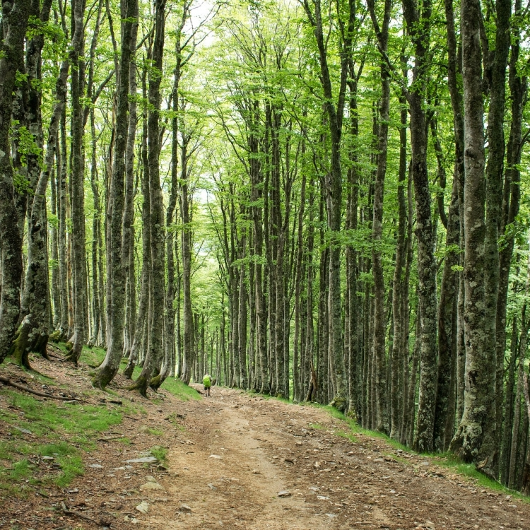Viaje a El Camino de Santiago Nadiu Viatges Turismo Responsable