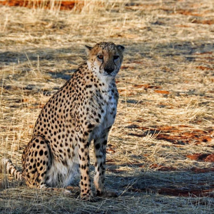 viatge namíbia nadiu viatges turisme responsable