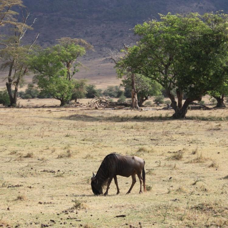 viatge tanzania nadiu viatges turisme responsable